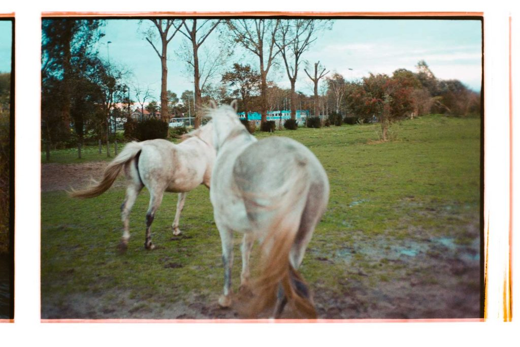 Visual diary during COVID-19 outbreak in Amsterdam, the Netherlands. This is an image of the horses at Schellingwoude.